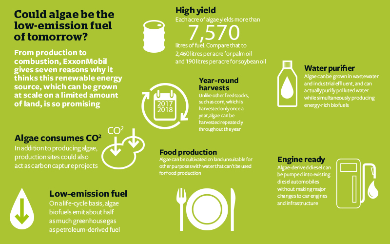 Could Algae be Low Emission Infographic